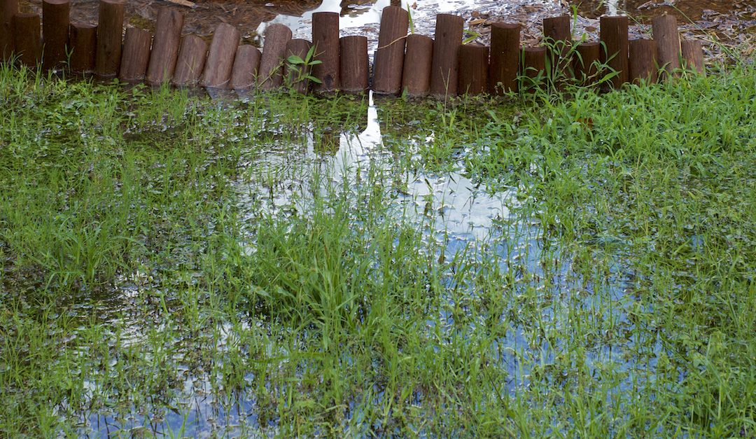 Spotting and solving the problem of backyard flooding