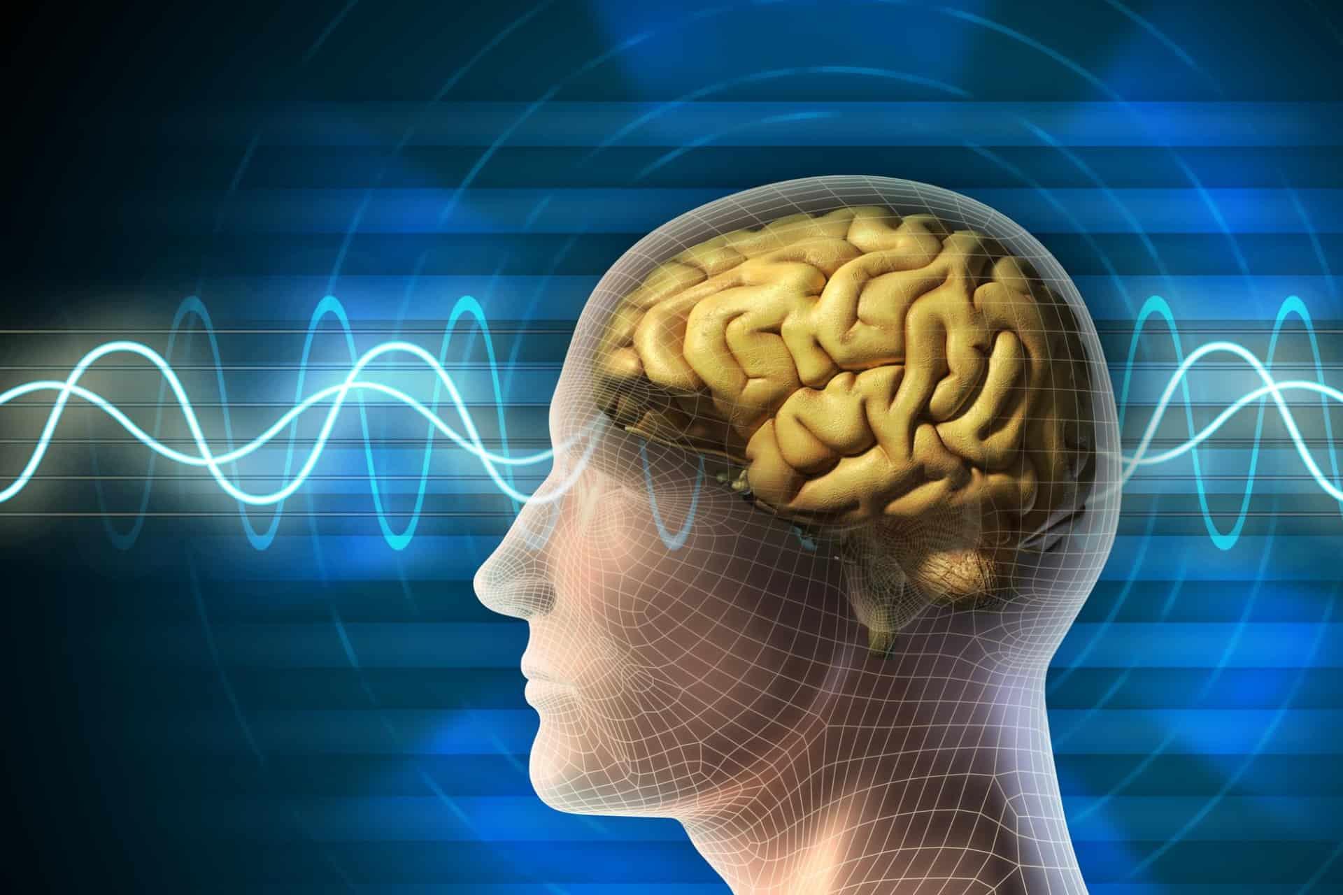 a brain healthy life